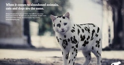 Cool Ads From Around The World Starring Cats