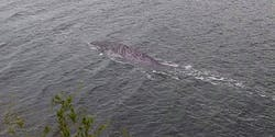 Is this a photo of the Loch Ness Monster?