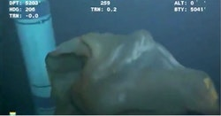 Deep-Sea Creature Caught On Camera Near An Oil-Rig